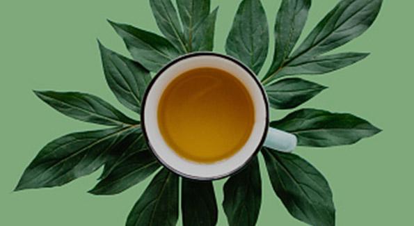 Tasse de thé sur des feuilles